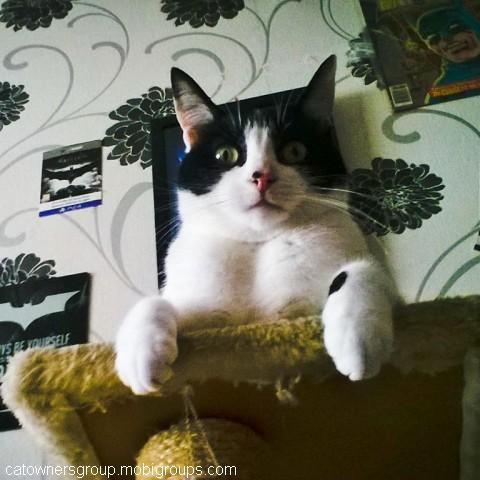 Why, it's my cat (: