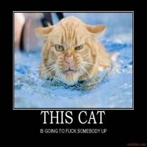 .:KittyKa