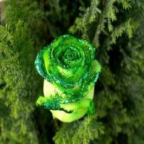 green-ros