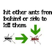 Ants Fighting Championship