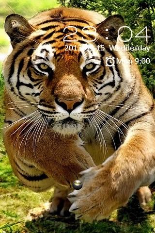 Tiger Locker