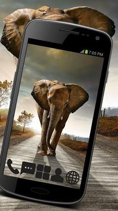 Beautiful Elephant Theme