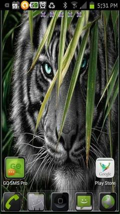 tiger spy