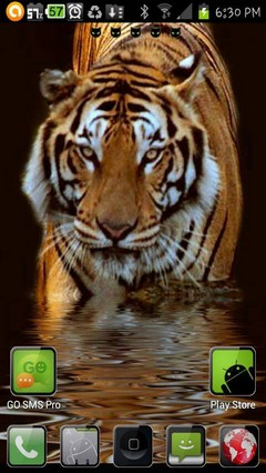 tiger ripple