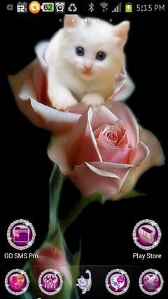cute kitty rose