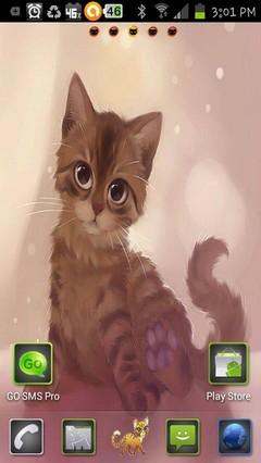 cute tabby kitty