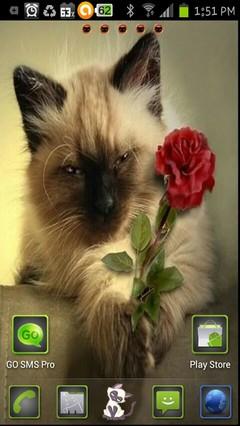 romantic kitty