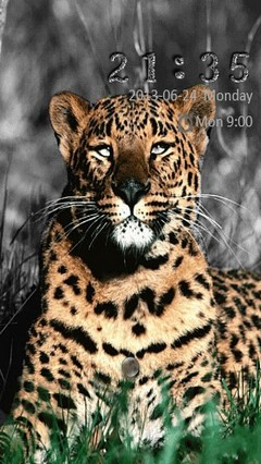 Leopard Go Locker