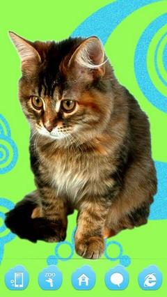Jazzy Cute Kitty Cat Go Launcher