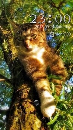 Kitty Go Locker 2