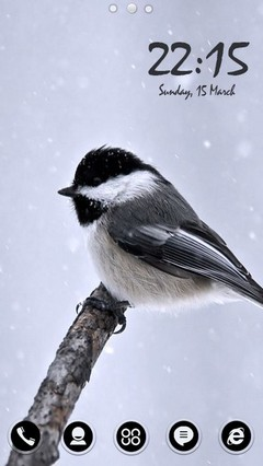 Titmouse Bird