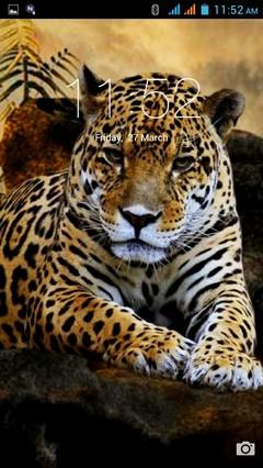 Wild Cats 375