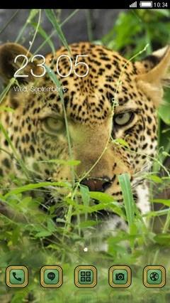 Leopard 375
