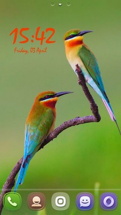 Golden BeeEater Birds 39