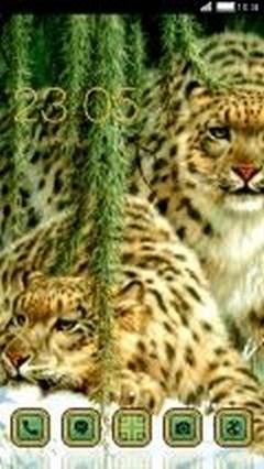 Wild Cats leopard