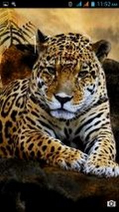 Wild Cats New