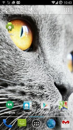 Mysterious Kitty