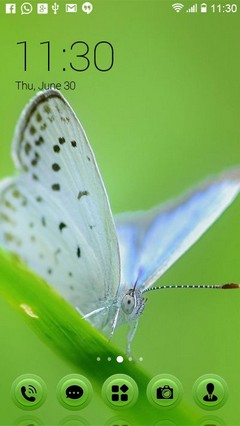 White Butterfly 408