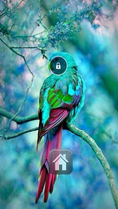 Colorful Bird Lock Screen