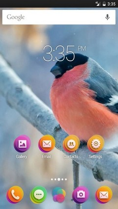 Bullfinch winter Apex Launcher Theme