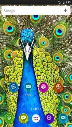 Peafowl animal Nova Launcher Theme