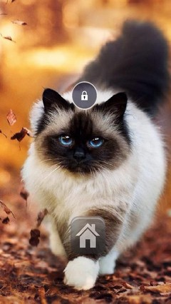Exotic Cat Lock Screen Theme