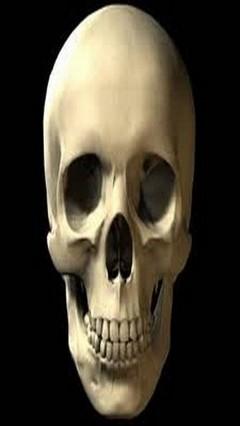 GO Launcher EX Theme Bones