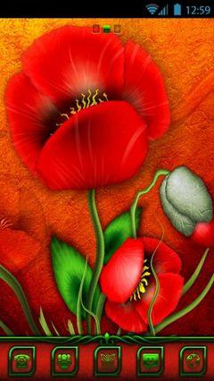 Poppies ( 23 )