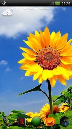 Go Launcher nature flowers