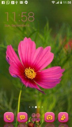 Pink Flower 387