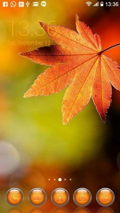 Autumn Leaves 51