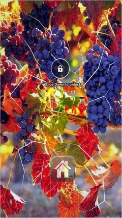 Autumn Grape Vine Lock Screen
