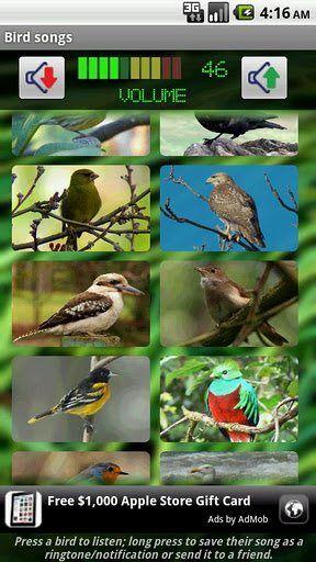 bird songs 2016 1334834017.jpg