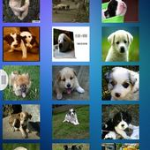 Free Cute Puppies Wallpapers