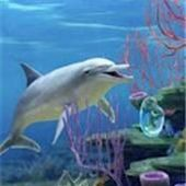 Dolphin Coral Reef LWP
