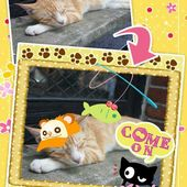 My Cat Photo Sticker Free