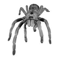 Tarantulas v1.9.15