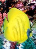 Asha Aquarium