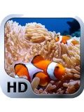 Ocean Life Fish Wallpapers 240x320KeypadPhone