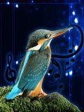 Birds Sound Effects 240x320