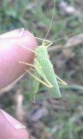Grasshopper v1.2 (NEW)