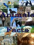 Funny Animal Facts 240x400