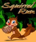 Squirrel Run - Free