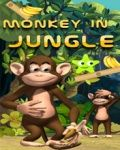 Monkey In Jungle