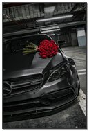 Mercedes Roses
