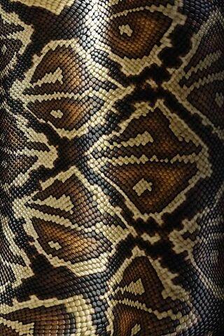 Kulit ular