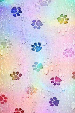 Impressões da pata do arco-íris