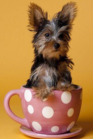 كلب في كأس الشاي
