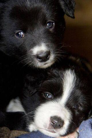 귀여운 개들