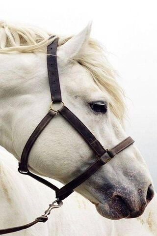 पांढरा घोडा